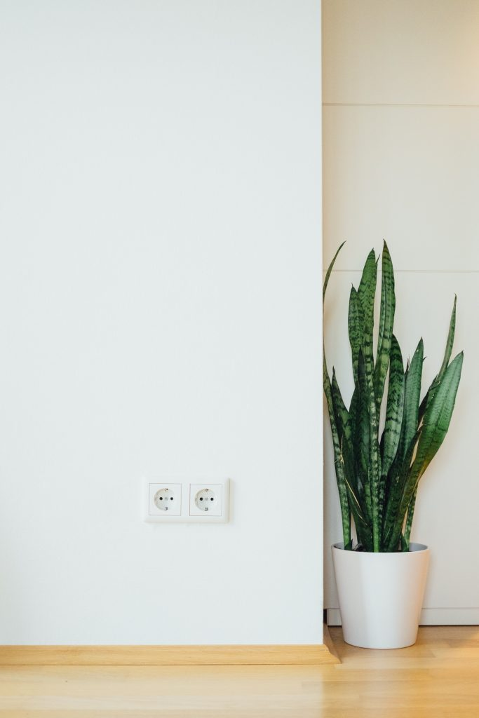 A potted snake plant placed in a corner indoors